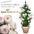 【ご予約分のみ生産】初心者でも豪華に!香りのオベリスクローズバラ咲くお庭が超簡単!自分で仕立てなくても大丈夫送料無料【メッセージカード・ラッピング不可】【代引き不可】