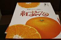 高級柑橘、紅まどんなです。大変糖度が高く美味しいです。