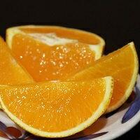 高級柑橘、紅まどんなは、果肉がゼリーのようで果汁が大変多く美味しい柑橘です。