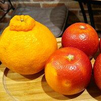 愛媛産のデコポンとブラッドオレンジ