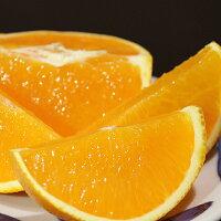 おいしい柑橘