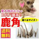 <メール便 送料無料>【形状おまかせ】国産 天然 鹿の角 犬(丹波鹿) 1本 サイズ:L (約20cm〜25cm) 鹿のつの 犬 鹿角…