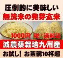 【1000円ポッキリ送料無料】お試しサイズ白米モード楽々炊飯!圧倒的に美味しい減農薬の玄氣750g(5合・真空パック)…