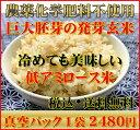 【究極の玄氣】無農薬・巨大胚芽の発芽玄米圧倒的に美味しい無農薬の玄氣1.5kg(真空パック)白米モード楽々炊飯!【…