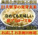【究極の玄氣】無農薬・巨大胚芽の発芽玄米750g(5合)お試しサイズ白米モード楽々炊飯!圧倒的に美味しい無農薬の玄…