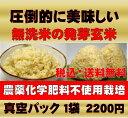 【新米】無農薬の発芽玄米白米モード楽々炊飯!圧倒的に美味しい無農薬の玄氣1.5kg真空パック【無農薬 玄米 発芽玄米 …