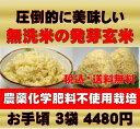 【新米】無農薬の発芽玄米白米モード楽々炊飯!圧倒的に美味しい無農薬の玄氣1.5kg×3袋(4.5kg真空パック)【無農薬 …