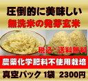 無農薬の発芽玄米白米モード楽々炊飯!圧倒的に美味しい無農薬の玄氣1.5kg真空パック【無農薬 玄米 発芽玄米 無洗米】