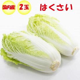 はくさい Lサイズ 2玉 1.8kg以上/玉【季節野菜 11月〜2月 送料別 常温発送】