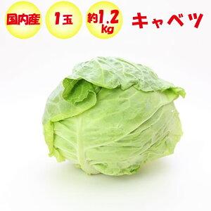 キャベツ 1玉 Lサイズ/約1.2〜1.5kg【季節野菜 11月〜5月 送料別 常温発送/クール便(気温によって配送方法変更)】