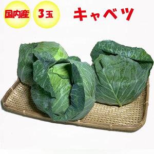 キャベツ 3玉 Lサイズ/約3.6〜4.5kg【季節野菜 11月〜5月 送料別 常温発送/クール便(気温によって配送方法変更)】