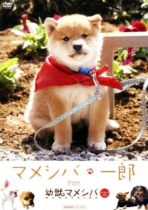 【中古】マメシバ・一郎 from 「幼獣マメシバ」DVD/邦画ファミリー&動物