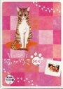 【中古】初限)やっぱり猫が好き 1-6 BOXセット 【DVD】/もたいまさこDVD/邦画TV