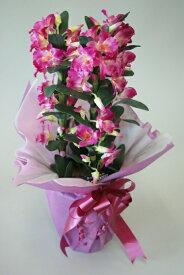 デンドロビューム H55cm 人工観葉植物 造花