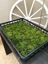 砂苔10トレー分(約2平米分) 苔 植栽 スナゴケ テラリウム ガーデニング ガーデン 庭 お庭 外構 エクステリア 育て方・苔の貼り方説明書付