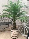 ハンドメイド樽付 フェニックスロベレニー8-9号 極太M 110〜140cm 送料無料 観葉植物 ヤシの木