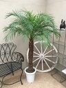 フェニックスロベレニー 8-9号 MA H140-160cm 送料無料 観葉植物 新築祝い 開店祝い 開業祝い 引っ越し祝い ギフト お祝い
