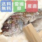 愛媛ゆら鯛の「塩釜」C