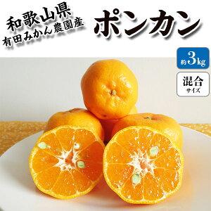 ポンカン 3kg 箱買い 贈答用(秀)【和歌山県有田市産】家庭用でもOK・柑橘の中でも甘味が強いポンカン・送料無料
