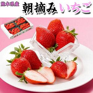 朝摘み いちご(ひのしずく、ゆうべに、紅ほっぺ等)約300g × 4パック(合計1.2kg) 家庭用ギフト・熊本県産 3月末まで 送料無料