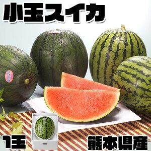 小玉 スイカ 熊本県産 1箱 小玉・1.8kg(1玉)  高級すいか|化粧箱入り 贈答用 ギフト・送料無料