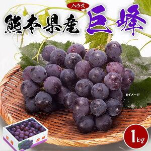 巨峰 ぶどう 1kg 糖度18度 つぶ大き目 熊本県産 ハウス栽培 |化粧箱入り 贈答用 お中元 ギフト・送料無料
