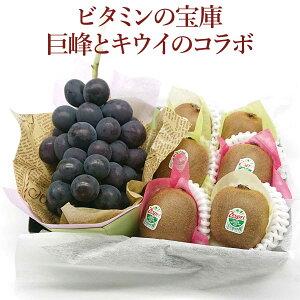 『ビタミンの宝庫 巨峰とキウイのコラボ』お中元 暑中見舞い 誕生日 お祝い お供え 冠婚葬祭 プレゼント 贈り物