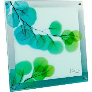壁掛け飾り 絵画 おしゃれ かわいい | X RAY ガラス アート 「ユーカリ(Mサイズ)」 | ガラス 絵画 XR-05010 | 絵画 |