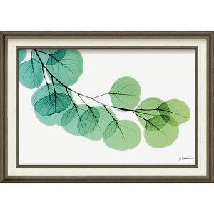 壁掛け飾り 絵画 おしゃれ かわいい | X RAY キャンバスアート 「ユーカリ(Mサイズ)」 | 絵画額 XR-12008 | 絵画 |