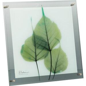 壁掛け飾り 絵画 おしゃれ かわいい | X RAY ガラス アート 「グリーン ユーカリ(Lサイズ)」 | ガラス 絵画 XR-07011 | 絵画 |