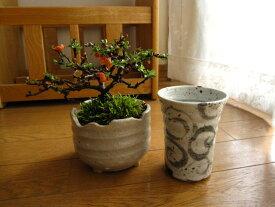 【梅盆栽】 長寿梅盆栽と信楽焼フリーカップの花見セット 縁起物としてプレゼントにも人気 チョウジュバイ ちょうじゅばい ミニ盆栽 【