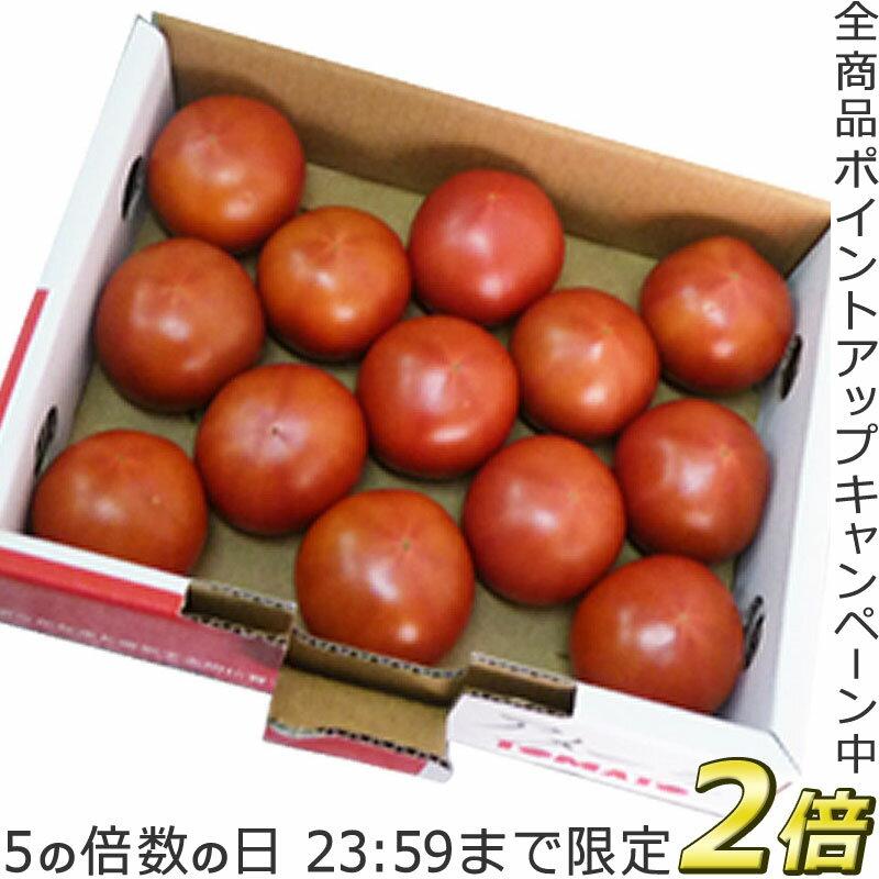 P2倍[5/25限定]フルーツトマト【アメーラトマト】1kg 高糖度トマト 甘いトマト お取り寄せ 送料無料