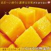 3 L尺寸太阳的卵|宫崎芒果太阳的卵