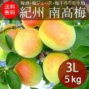 紀州和歌山 南高梅(生梅)3L×5kg(梅酒・梅ジュース・梅干用)JA和歌山県農【送料無料】【代引き不可】