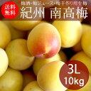 紀州和歌山 南高梅(生梅)3L×10kg(梅酒・梅ジュース・梅干用)【送料無料】【代引き不可】
