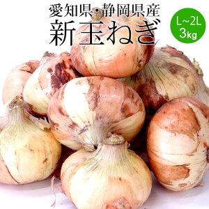 新玉ねぎ 2Lx3kg (愛知県・静岡県産)[送料無料 使いやすい量 国産 たまねぎ 野菜便 常温便]