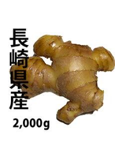 無農薬生姜2,000g 長崎県産 国産生姜 しょうが ショウガ 根生姜