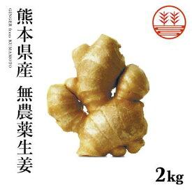 無農薬 生姜 2kg 熊本県産 国産 生姜 しょうが ショウガ 根生姜 佃煮 薬味 きざみ 生姜 生姜焼き 唐揚げ