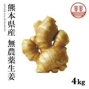 無農薬 生姜 4kg 熊本県産 国産 生姜 しょうが ショウガ 根生姜 佃煮 薬味 きざみ 生姜 生姜焼き 唐揚げ