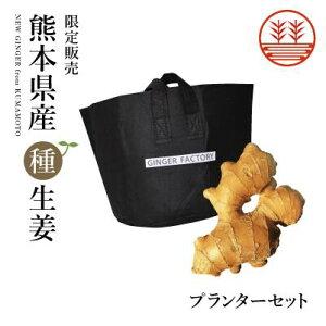 種生姜 + 生姜プランター セット 国産 生姜 しょうが ショウガ 生姜栽培 しょうが栽培 家庭菜園