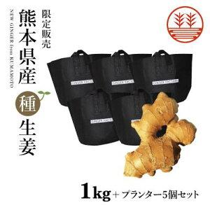 種生姜 熊本県産 無農薬生姜 1kg +プランター5個セット 送料無料 国産 生姜 しょうが ショウガ 生姜栽培 しょうが栽培 家庭菜園 種子 種用 たねしょうが 種しょうが 種生姜 たね生姜 生姜種