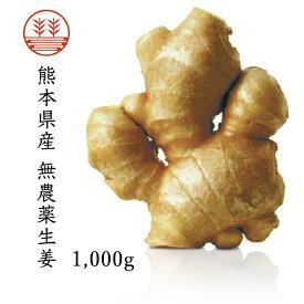 無農薬生姜1,000g 熊本県産|国産生姜|しょうが ショウガ|根生姜|【送料込み】