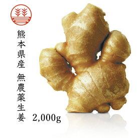 無農薬生姜2,000g 熊本県産|国産生姜|しょうが ショウガ|根生姜