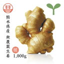 【種生姜】熊本県産無農薬生姜1,000g【送料無料】|国産生姜|しょうが ショウガ|生姜栽培 しょうが栽培|家庭菜園