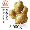 無農薬生姜2,000g 熊本県産