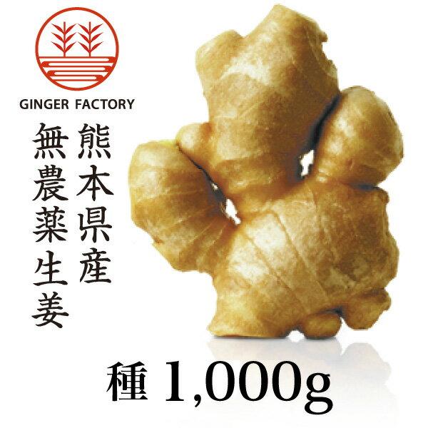 【種生姜】熊本県産無農薬生姜1,000g 6月末まで販売|国産生姜|しょうが ショウガ|生姜栽培 しょうが栽培|家庭菜園【送料込み】
