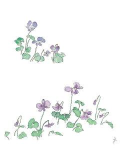 万葉野の花絵はがきNo.1