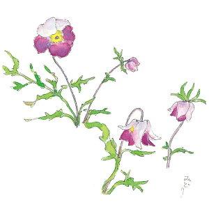 万葉野の花絵はがきNo.3