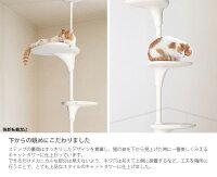Cat Forest キャットフォレスト