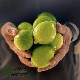 国産青レモン2キロ 無農薬 防腐剤不使用 ノーワックス 送料無料 無農薬レモン